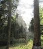 2015.07.15 Brand Baum Windischbergerdorf