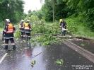 2016.06.15 Baum auf PKW Katzbacher Straße