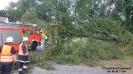 2016.09.18 Baum auf Fahrbahn Am Galgenberg