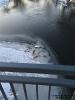 2017.01.20 Toter Schwan auf Eisfläche Fluß Regen