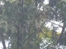 2018.07.23 Katze auf Baum