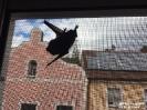 2019.10.01 Fledermaus im Fliegengitter